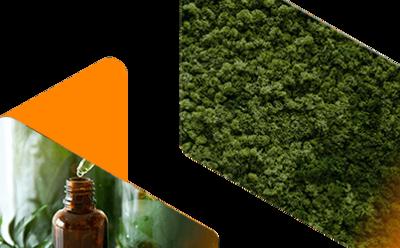 EarthOil Natural Ingredients Supplier banner image
